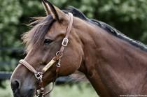 Schöne Pferdebilder